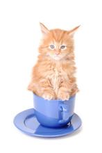 Kitten Is Sitting In A Big Mug