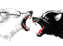 White And Black Fighting Wolfs