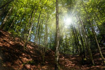 forêt en montagne et ciel bleu