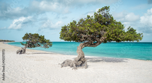 Eagle beach with divi divi trees on Aruba island фототапет