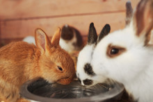 Cute Funny Rabbits In Zoologic...