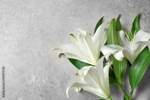 Beautiful lilies on gray background