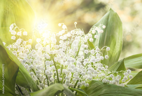 Canvas Prints Lily of the valley Flower lily of the valley, closeup, spring