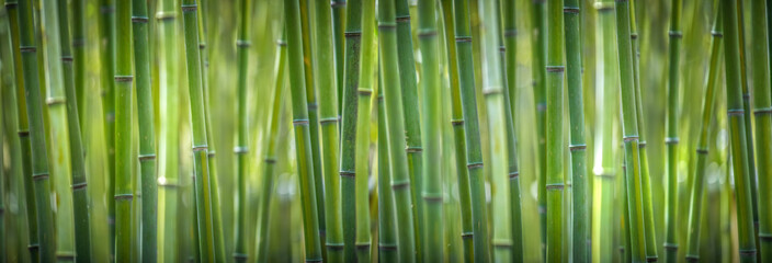 bambusov širok pano