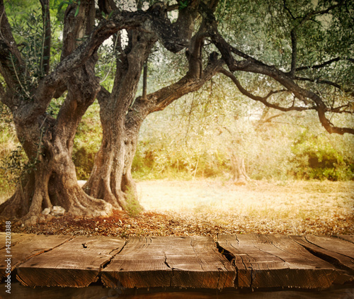 Foto op Aluminium Olijfboom Olive tree with table