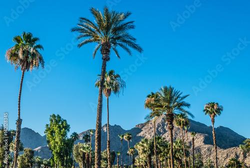 Photo sur Aluminium Palmier Palm Trees of Palm Springs