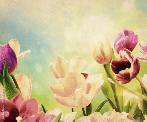 tulpen tropfen textur nostalgisch - 142129522