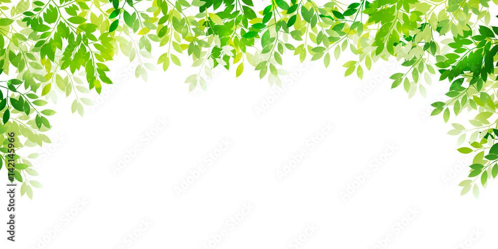 Fototapety, obrazy: 新緑 葉 緑 背景