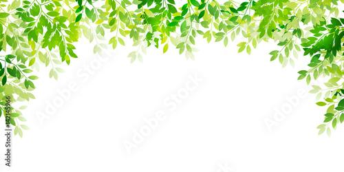 Fotografía  新緑 葉 緑 背景