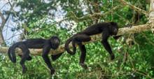 Monkeys Sitting On A Tree In T...