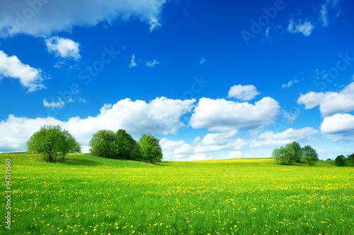 Foto op Plexiglas Weide, Moeras Field with yellow dandelions and blue sky
