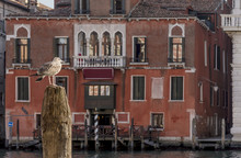 A Seagull Perched On A Wooden Pole Controls Traffic On The Grand Canal With The Hotel San Cassiano Ca 'Favretto In The Background, Venice, Italy