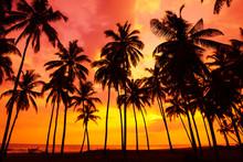 Tropical Beach At Sunset