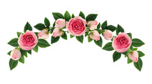 Pink Rose Flowers And Buds Arc...