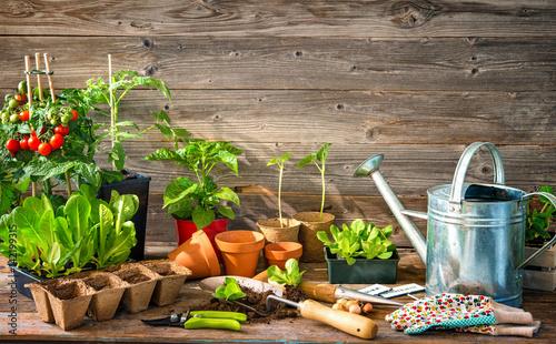 Papiers peints Jardin Planting seedlings in greenhouse