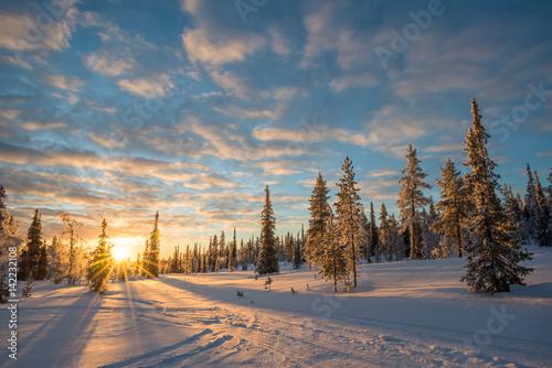Foto op Aluminium Blauw Snowy landscape at sunset, frozen trees in winter in Saariselka, Lapland, Finland