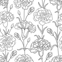 Vector seamless pattern with outline Carnation or Clove flowers, bud and leaves in black on the white background. Elegance floral background in contour style for spring design and coloring book.