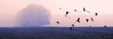 A Flock Of Crows (rooks)