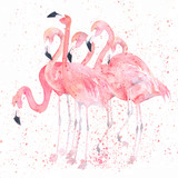 Fototapeta Zwierzęta - Watercolor flamingos with splash. Painting image