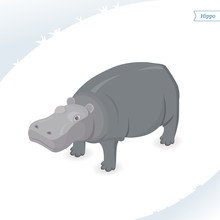 Hippo Isolated On White Backgr...
