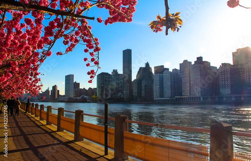 Fototapeta New York Spring obraz