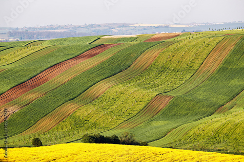Foto auf Gartenposter Gelb Sunny morning at green and yellow spring fields.