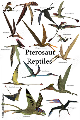 Pterosaur Reptiles - A collection of various Pterosaur reptiles from different prehistoric periods of Earth's history. Wall mural