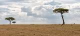 Fototapeta Sawanna - Kenya Masai Mara park savannah