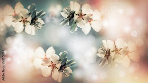 Soft focus on flower of fruit tree, flowering fruit tree - background