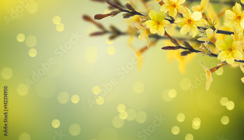 forsythia background Wallpaper Mural