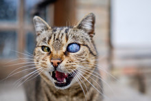 Monocular Cat With Universe In Eye 4