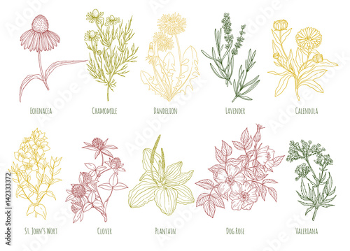 Photo  Vector vintage set of ten colored medicinal herbs