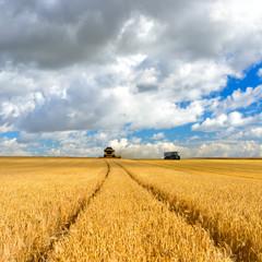 FototapetaMähdrescher und Traktor im Kornfeld ernten Gerste, Feld unter blauem Himmel