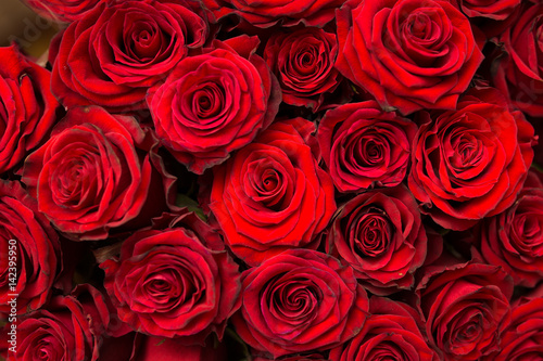 Red natural roses background #142395950