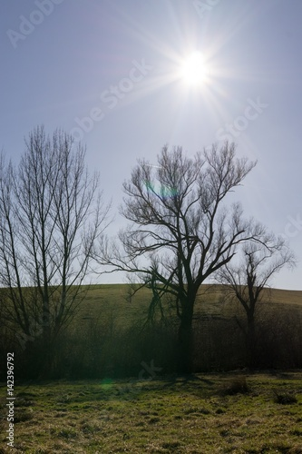 Spoed Foto op Canvas Grijze traf. Meadow with trees and views to mountains. Slovakia