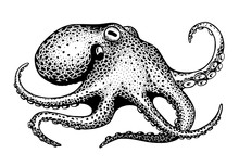 Octopus, Ink Drawing
