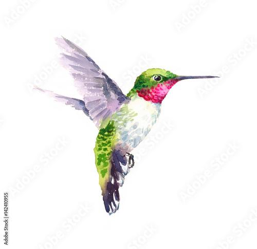 koliber-malowany-akwarela-roznokolorowy-najmniejszy-ptak-na-swiecie
