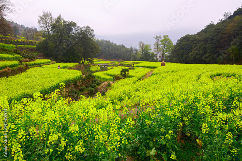 Foto op Aluminium Heuvel Wuyuan rape in full bloom landscape