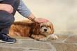 Femme caressant un chien Lhassa Apso couché