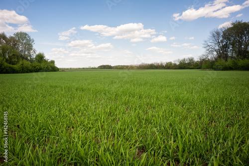 Foto op Plexiglas Weide, Moeras Green grass field