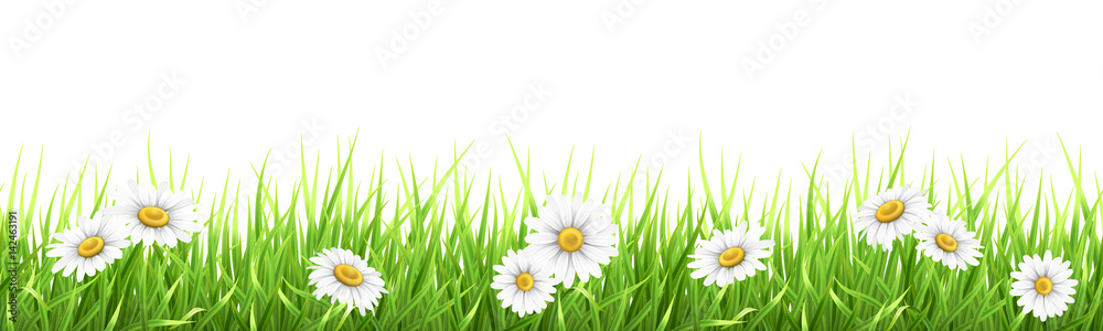Fototapety, obrazy: Grass and chamomile. High detailed vector illustration. Element for the design foreground card about nature.