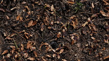 Background Of Forest Floor With Wood Chips, Sprigs, Leafs, Grass And Shredded Pine Cones