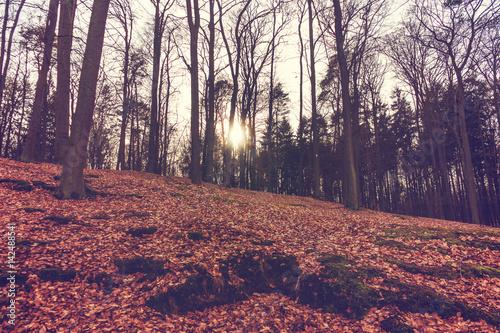 Foto op Aluminium Aubergine Sun rising through the trunks of trees