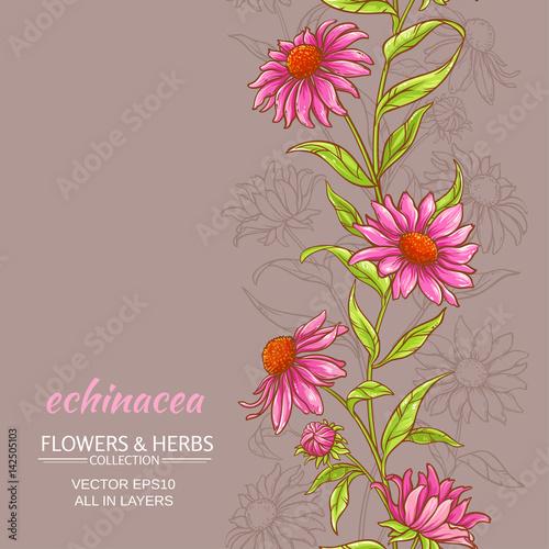 Poster Hibou echinace purpurea vector background
