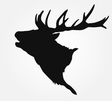 Silhouette Of The Buck's Head