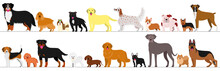 Standing Dogs Border Set