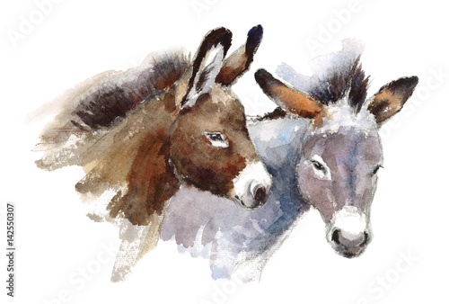 Obraz na plátne Watercolor Farm Animals Donkeys Couple Hand Drawn Illustration isolated on white