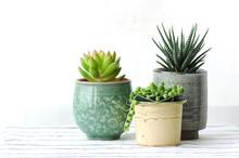 Various Ceramic Pot Of Succulent Haworthia Plants For Home Decoration