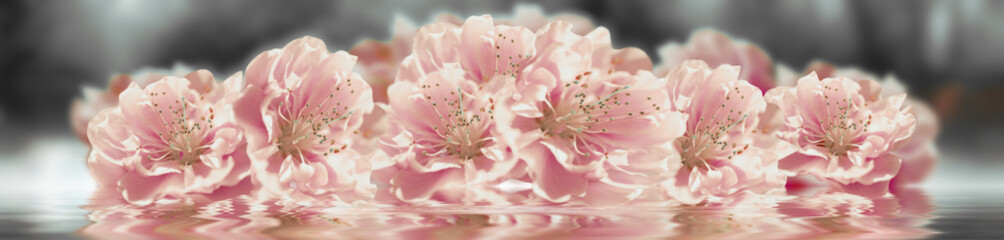Panel Szklany Podświetlane Panorama Sakura flower banner