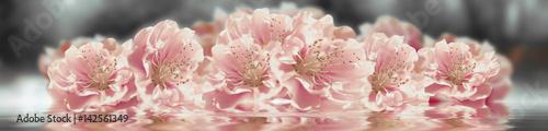 Doppelrollo mit Motiv - Sakura flower banner (von Ganna Chabanenko)